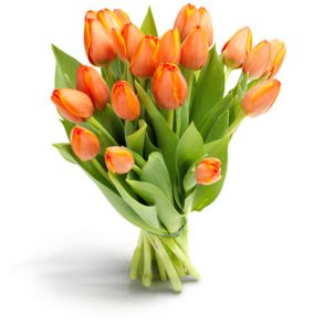 bos oranje tulpen groot