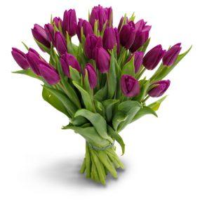 bos paarse tulpen groot