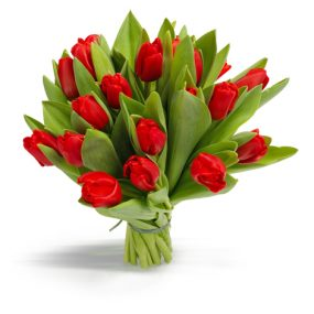 bos rode tulpen groot