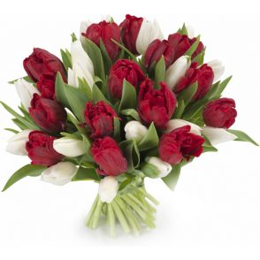 bos witte en rode tulpen groot