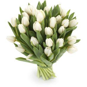 bos witte tulpen groot