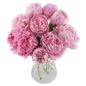 Pioenrozen roze